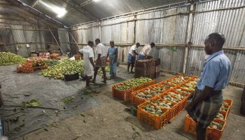 Farmers and agriculture in storage shed.