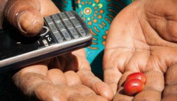 a hand holding a mobile phone and a cherry tomato