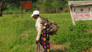 A woman carrying wood in Ndian, Cameroon